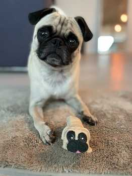 Fidget Toys - Pug Gifts - Stress Toys - Squishy Pug - Chubby Puppies - Pug Toys