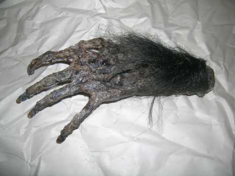 Cursed Monkey's Paw - Be Very Careful